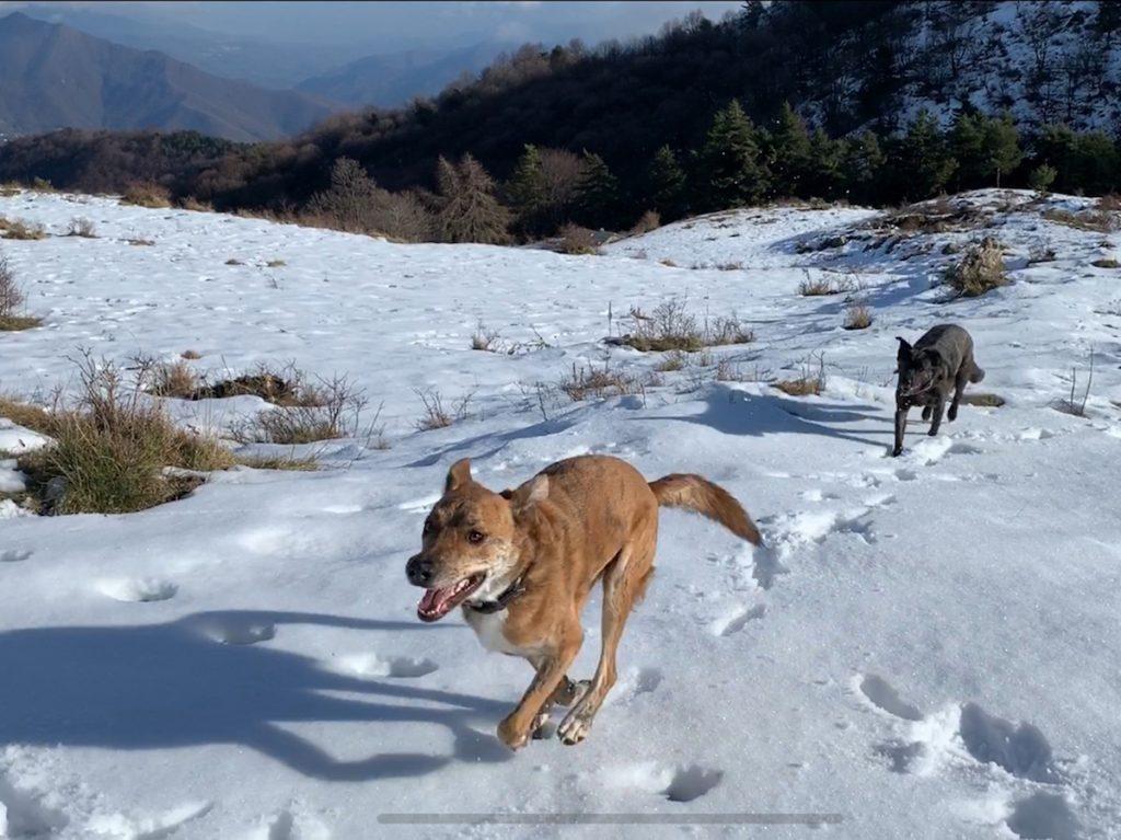 Mila und Rey geniessen das offene Plateau. Auch Mila und Rey sind Offroad auf Schnee und Eis unterwegs