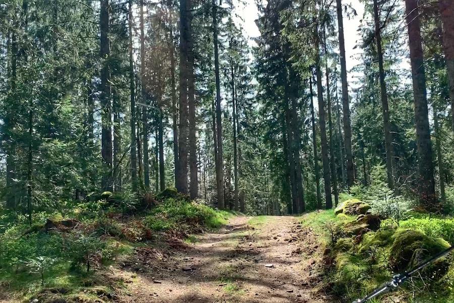 Offroad im Wald in den Vogesen