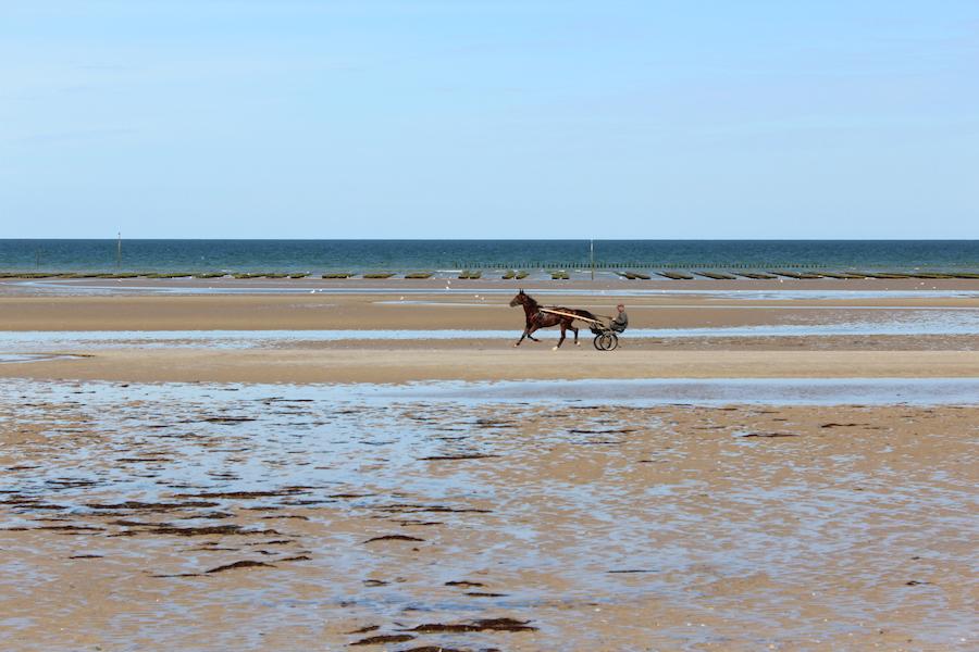 Pferd mit Sulky am Utah Beach, an der Küste der Normandie