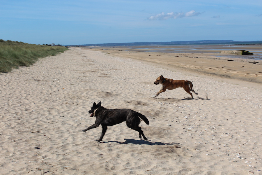 Rey und Mila on Utah Beach