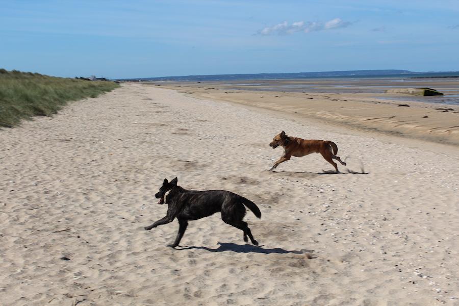 Rey und Mila an der Küste des Utah Beach in der Normandie