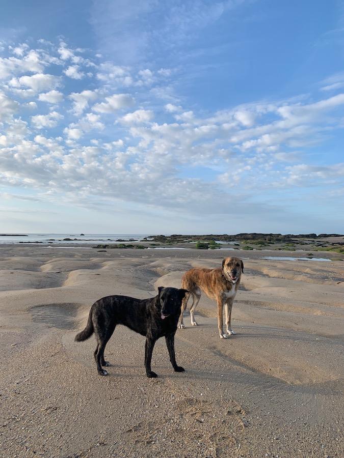 Weitläufiger Strand in Jonville