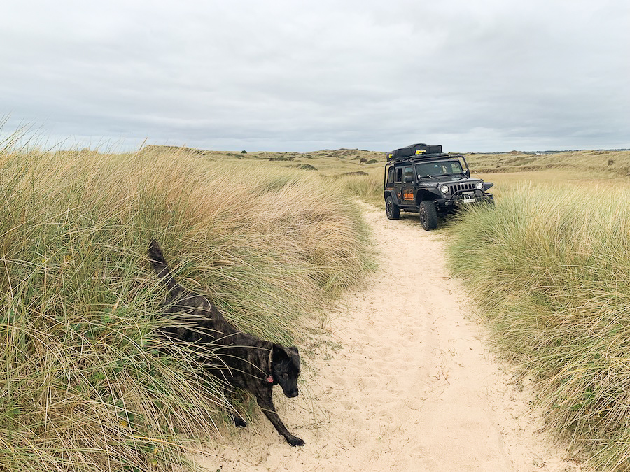 In the dunes of Lower Normandie