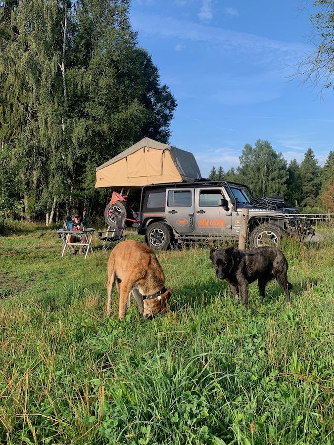Mit Jeep und Hunden am Stausee Lipno in Südböhmen, so sieht Overlanding in Südböhmen aus.
