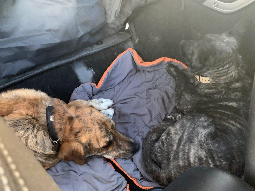 Mila und Rey haben ihren neuen Platz eingenommen, anstelle der Rückbank und direkt hinter uns