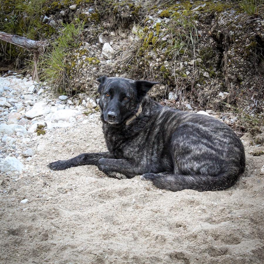 Overlanding Hund Mila