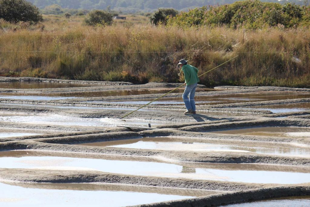 "Salt Worker pushing the salt to the edges with a long wooden rake, the ""las"""